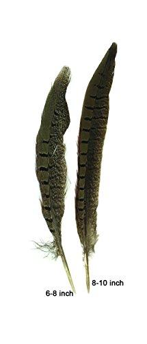 Ringneck Pheasant Tail 8-10